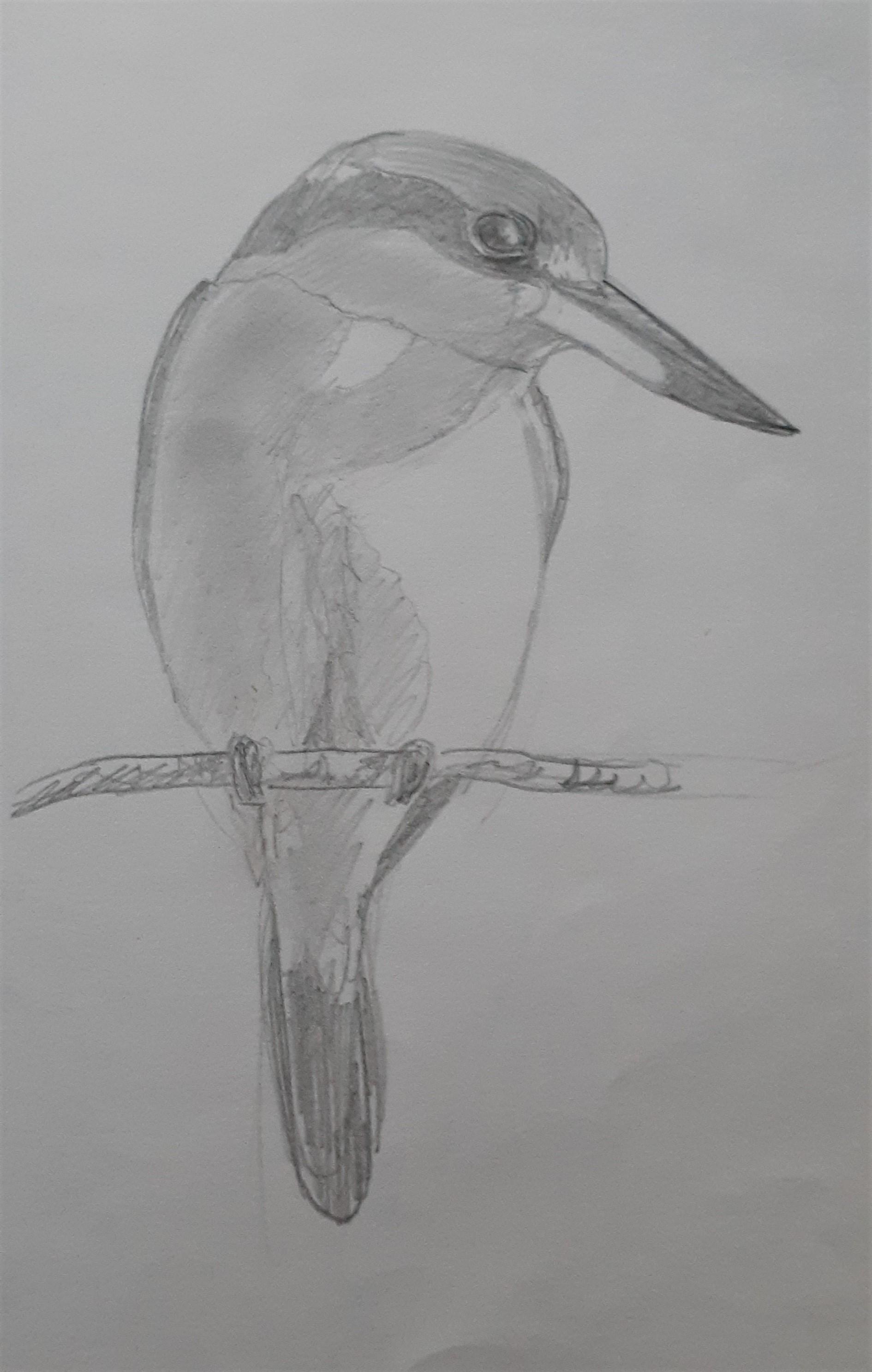 Sacred-Kingfisher
